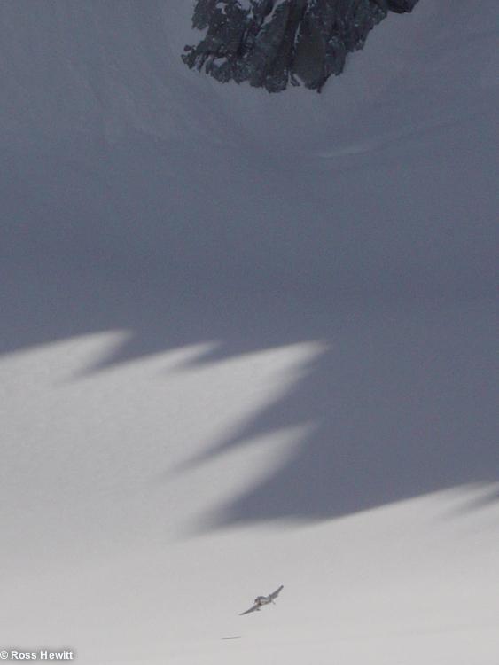 Alps 2005-64