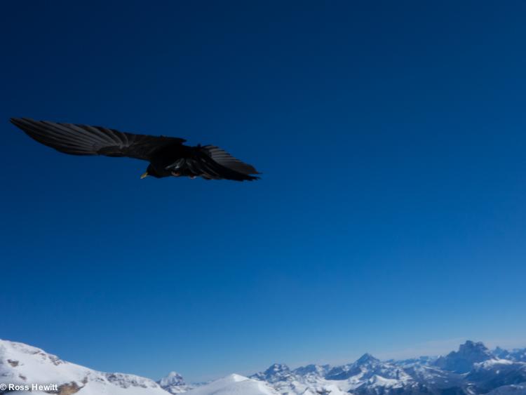 Dolomites ski-12