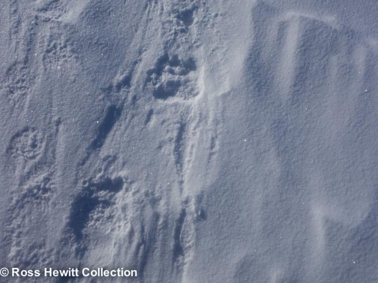 Baffin Berghaus Black Crows Ski Mounatineering Expedition-11