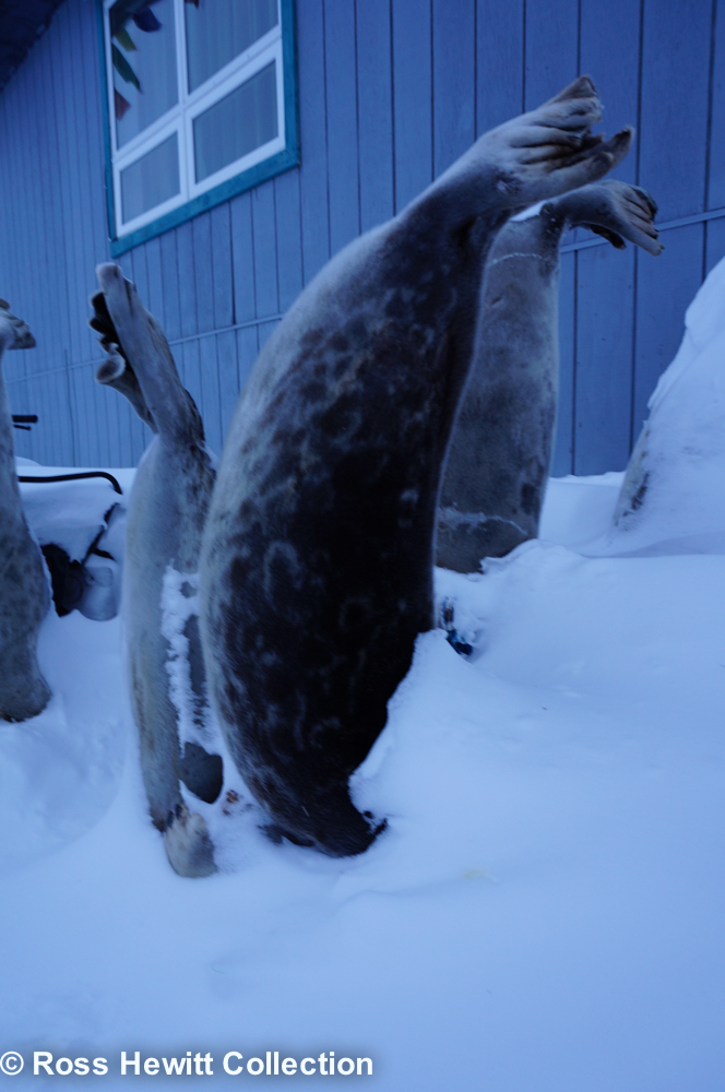 Baffin Berghaus Black Crows Ski Mounatineering Expedition-7